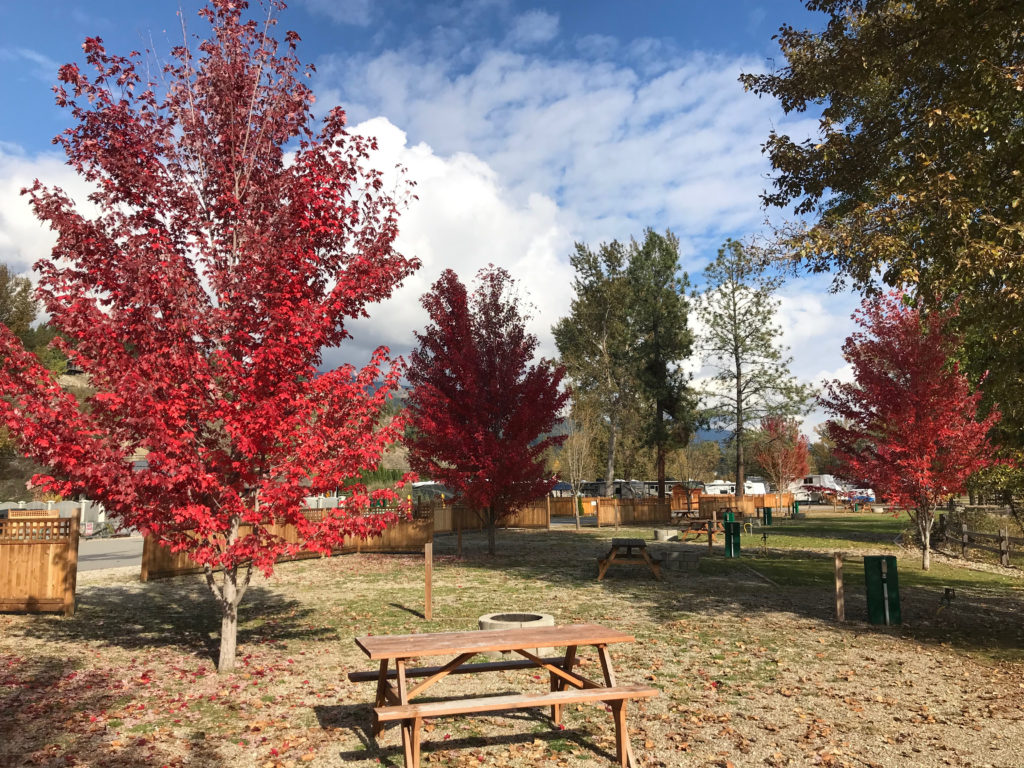 Fall colours in the Shuswap